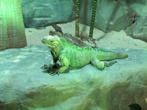 Reptile Posing