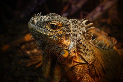 reptiles terrarium zoo