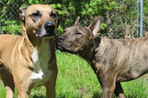 rescue dogs dogs rescue