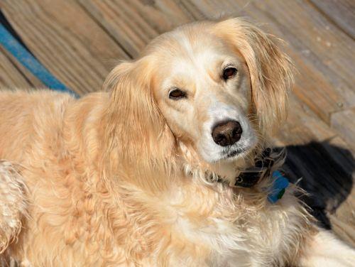 rescued dog pet cute