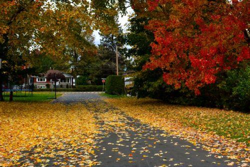Residential Neighborhood Street