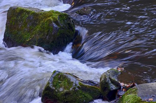river bach nature