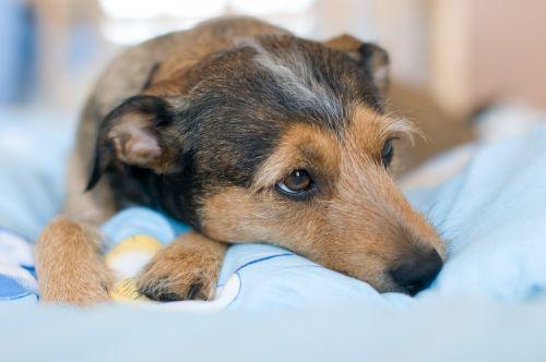 rest dogs pet