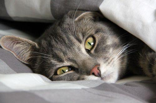 rest cat cute cat