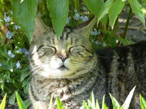 rest cat favorite place
