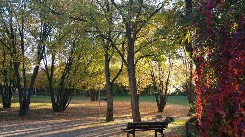 rest park leaves