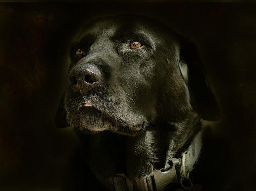 retarto dog face