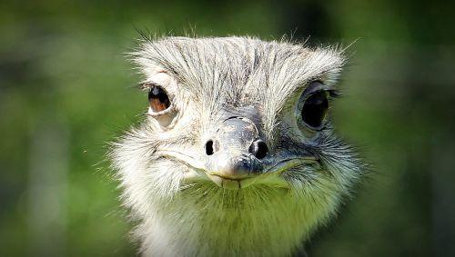 rhea bird bouquet head