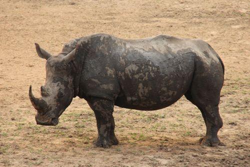 rhino exciting adventure