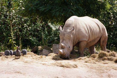 rhino zoo animals