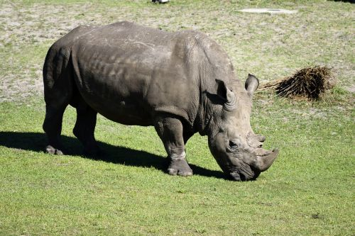 rhino wildlife animal reserve