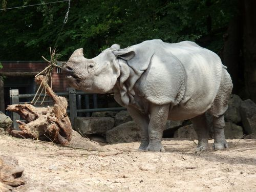 rhino freedom strong