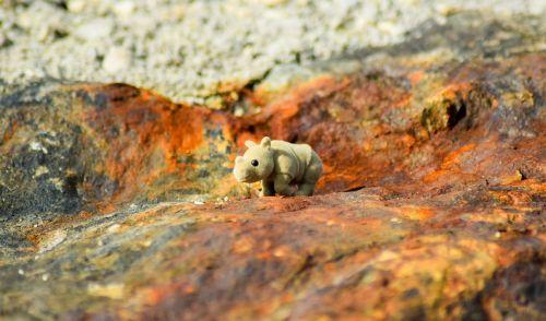 rhino rhinoceros grey