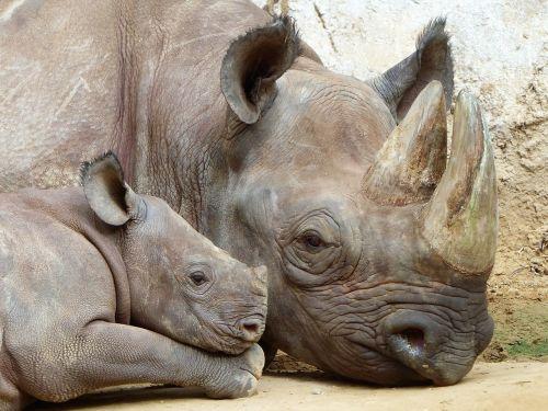 rhino magdeburg zoo