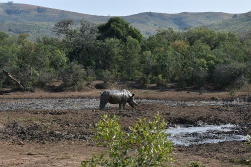 rhino big 5 south africa