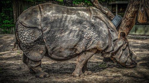 rhino  panzer  pachyderm