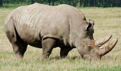 rhino safari park denmark