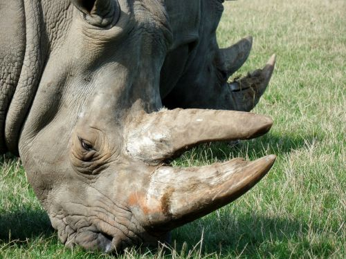 rhino park knuth borg