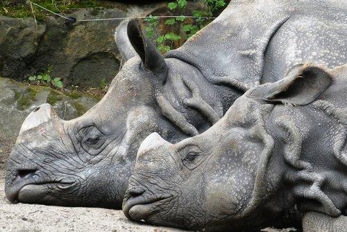 rhino  zoo  wild animals