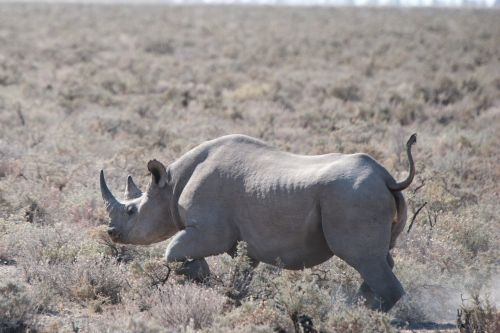 rhino safari etosha national park