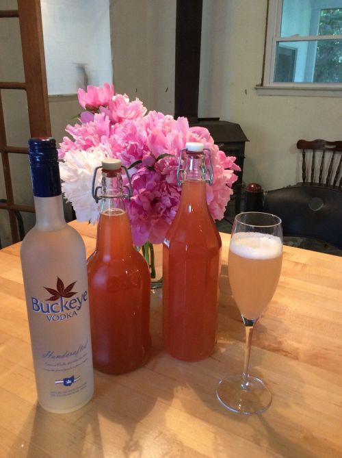 rhubarb cordials home-brew summer holidays
