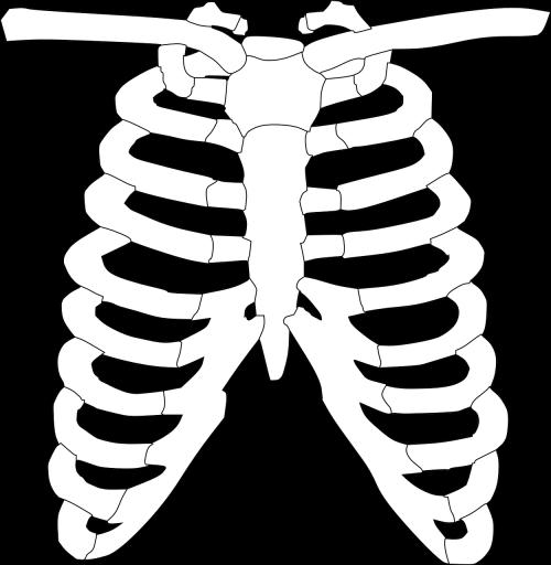 rib cage ribs