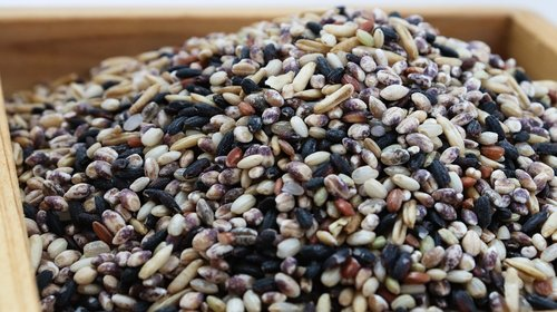 rice  the nutritional value of millet  bob