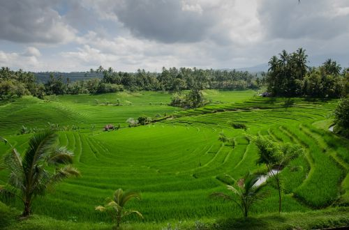 rice terraces paddy paddies