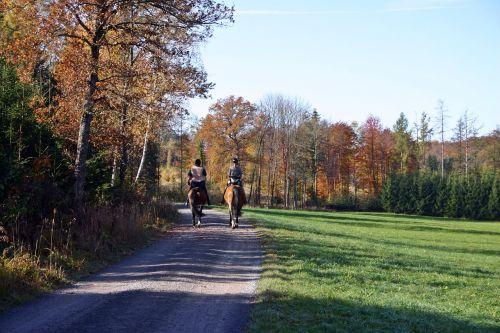 važiuoti,Jodinėjimas,miškas,Reiter,arkliai,jodinėjimas,kraštovaizdis,atsipalaidavimas,laisvalaikis,gyvūnas,du,mergaitė,pieva,laistymas,rudens miškas,medžiai,gamta,baden württemberg,pietų Vokietijos,hobis,linksma,arkliukas