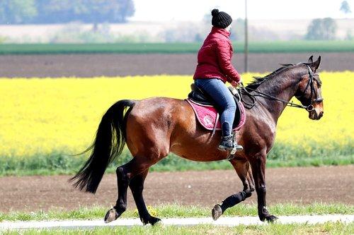 ride  leisure  horsewoman