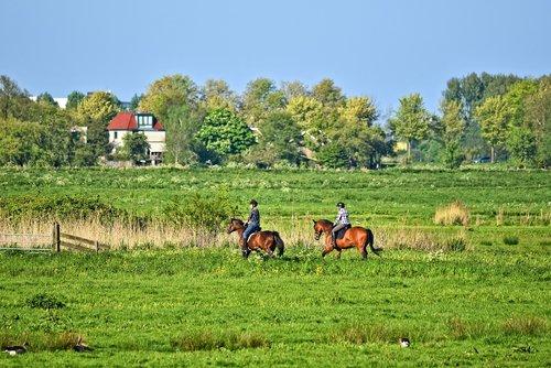 rider  equestrian  horsewoman