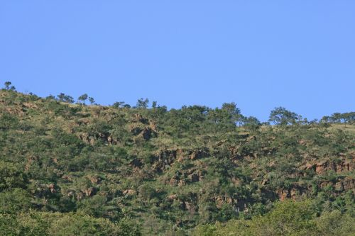 Ridge With Sky And Trees