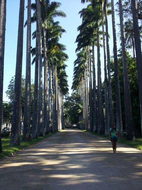 rio jardim botânico botanical garden