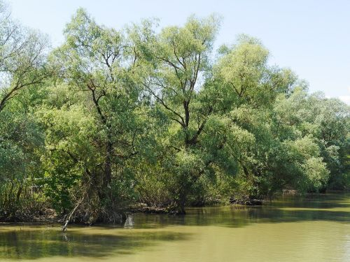 riparian zone world heritage site danube delta