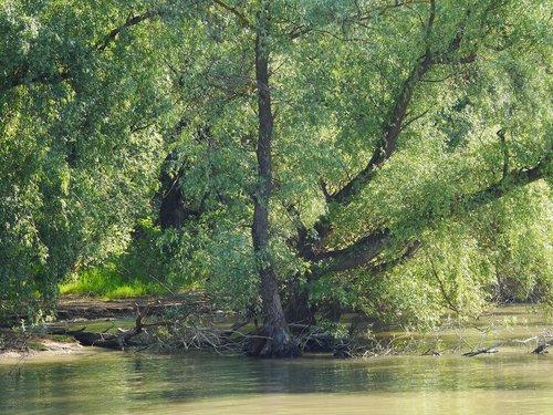 riparian zone  danube delta  romania
