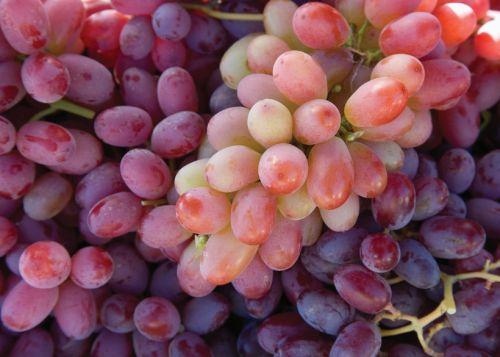 Ripening Grapes
