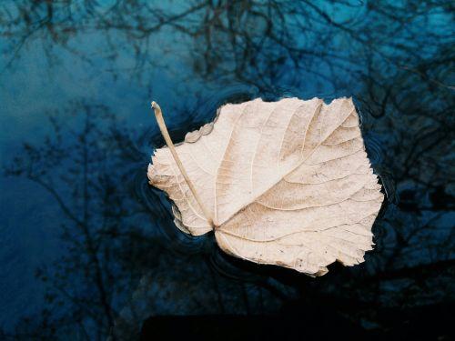river sheet autumn