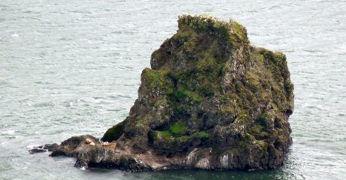river rocks sea lions