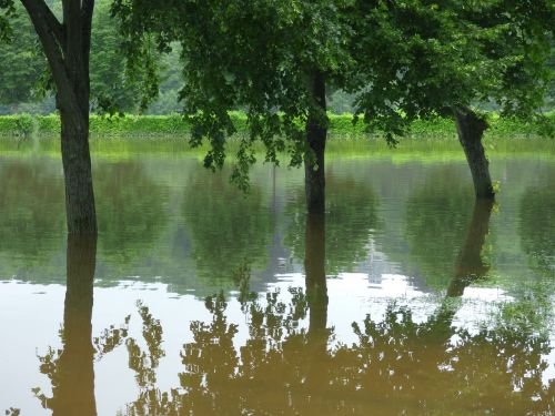 river floods trees