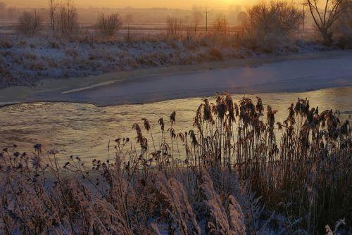 river cane winter