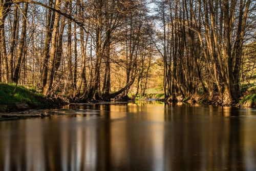 river trees bald trees