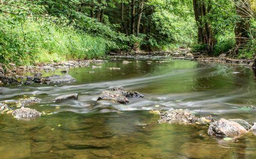 river trees stones