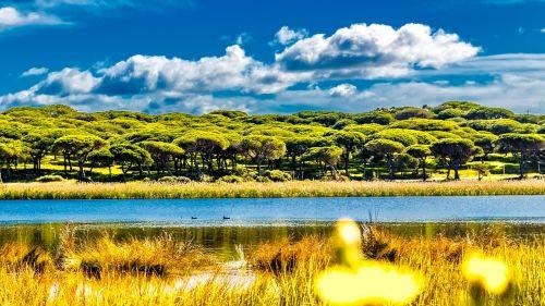 river delta mangrove
