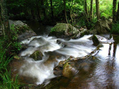 upė,srautas,dabartinis,vanduo,kraštovaizdis,krioklys,srautas,gamta,begantis vanduo,natūralus vanduo,miškas