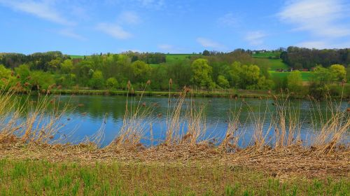 river trees bank