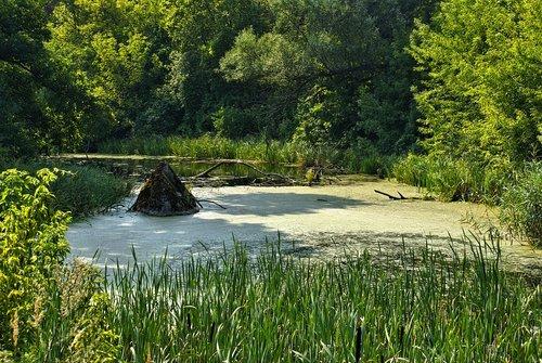 river  marsh  supraśl