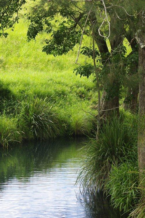 river  calm  trees