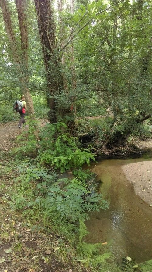 river trail eucalyptus