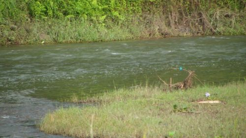 upė, džiunglės, chitwan, Nepalas, natūralus & nbsp, parkas, upės & nbsp, bankas, mėlynas & nbsp, paukštis, upės krantas Chitwan, Nepalas.
