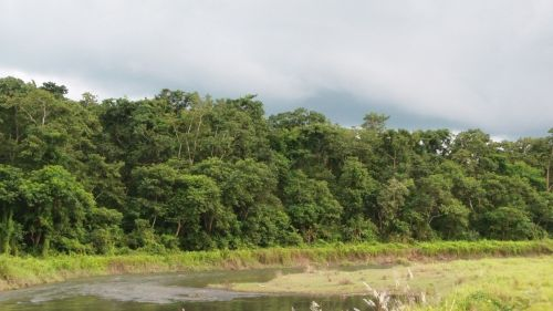River Bank In Chitwan, Nepal.